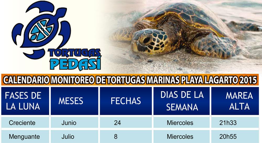 tortugas-pedasi