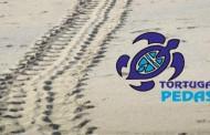 Monitoreo Tortugas Marinas Playa Lagarto