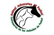 IV Campaña anual de Recaudación de fondos – Mardi Paws