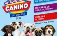 CONCURSO CANINO