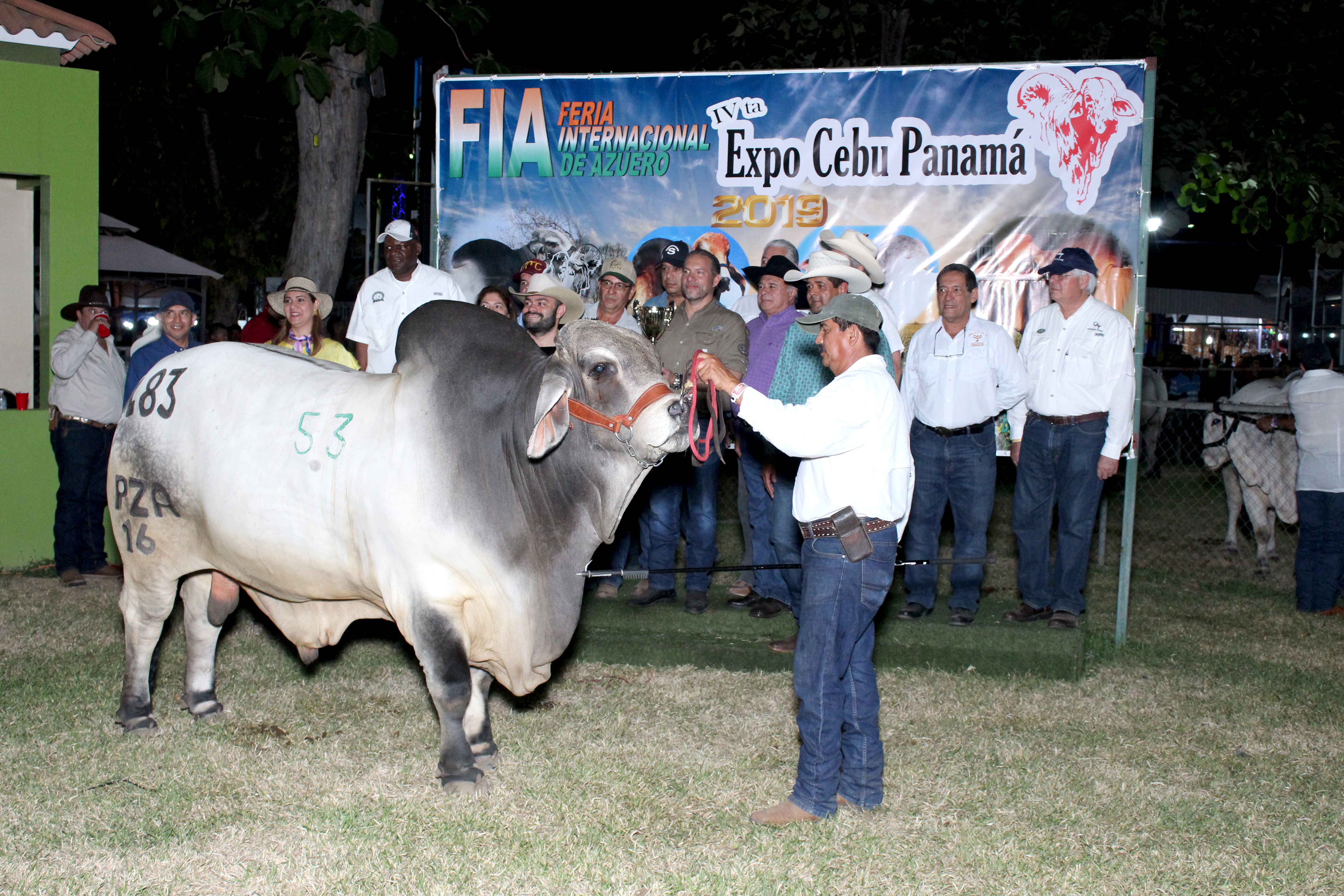 JUZGAMIENTO DEL MEJOR GANADO BRAHMAN DE PANAMA